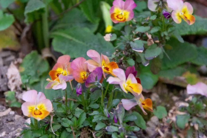 Bakonyi Házunk kertje